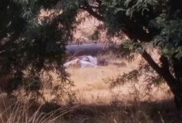 Asesinato en Tequisquiapan