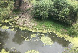 Jornadas de limpieza de Ribera del río en Tequis