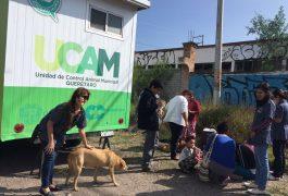 Capacitarán a infantes sobre el cuidado y tenencia responsable de mascotas